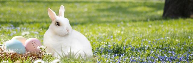 Le lapin de Pâques et ses oeufs.