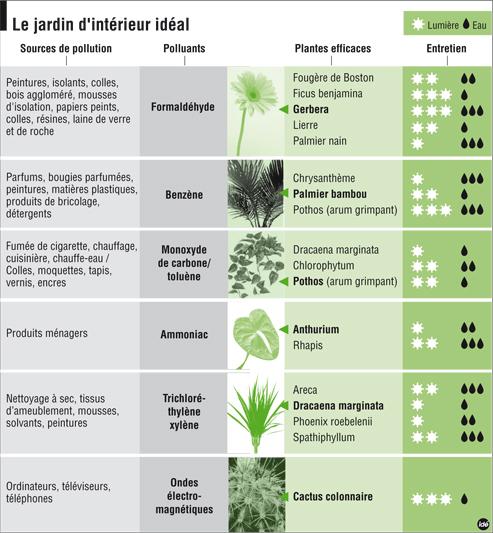 Quelles plantes dépolluantes pour votre bureau?