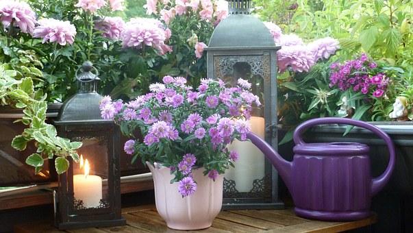 Les chrysanthèmes