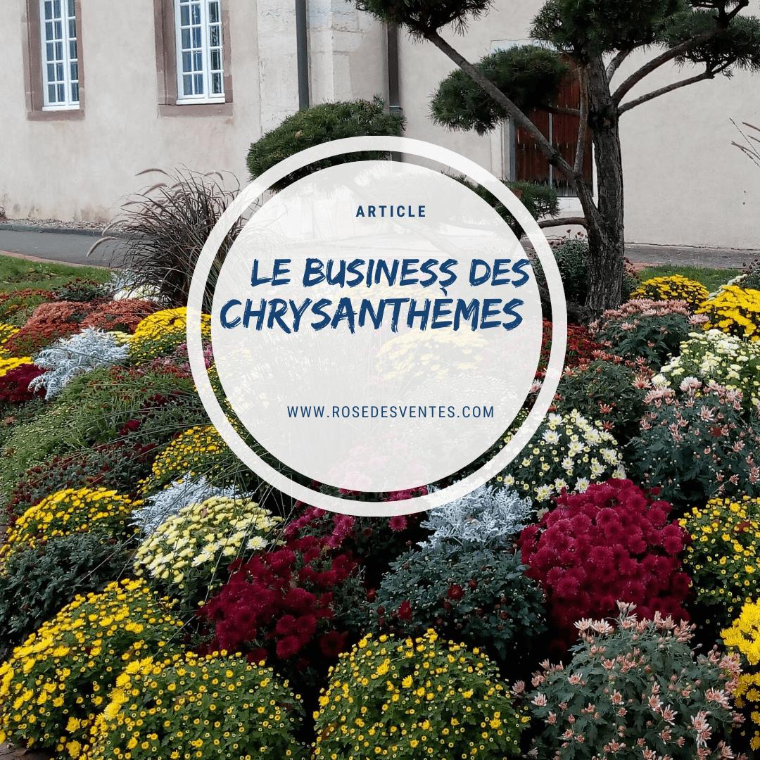 Le business des chrysanthèmes